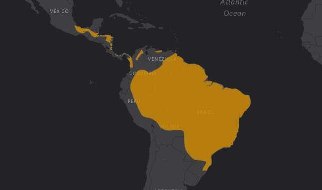 Mapa de localización del Aguila Arpía