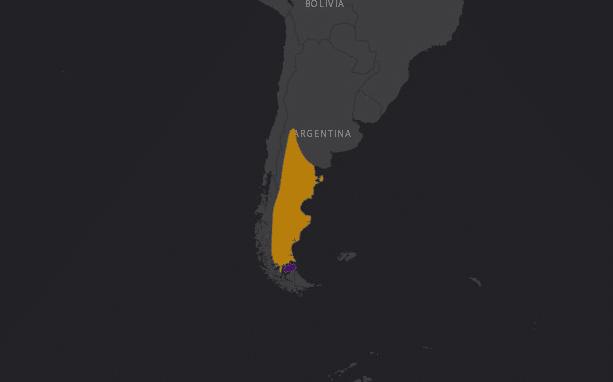 Mapa de localización de la Avestruz Andino