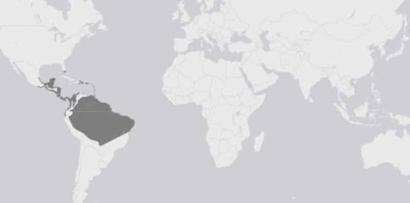 Mapa de rango geográfico para la iguana