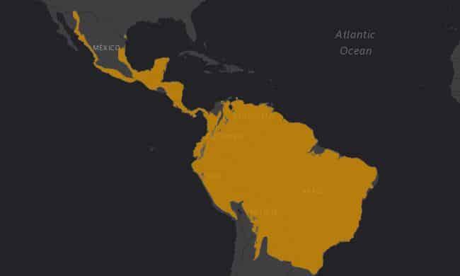 Mapa de rango geográfico para el Ocelote