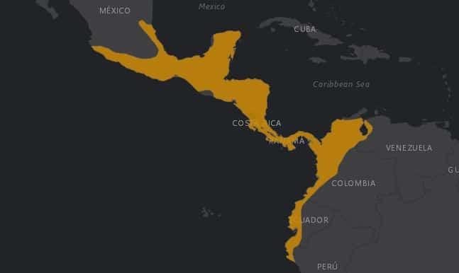 Mapa de rango geográfico para el Oso Hormiguero