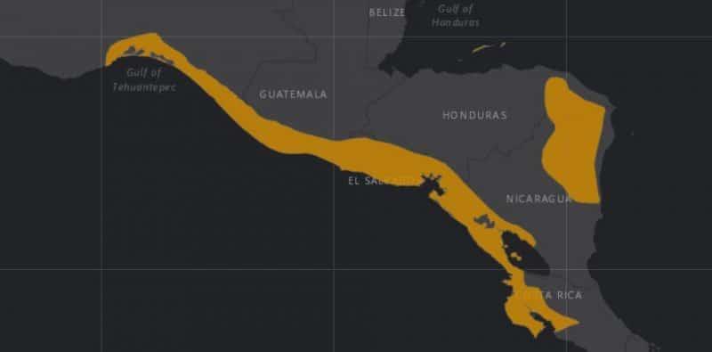 Mapa de rango geográfico para la Lora de Nuca Amarilla