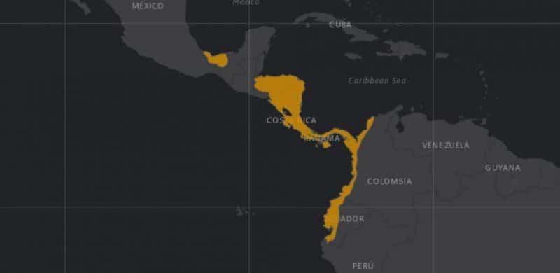 Mapa de rango geográfico para el Mono Congo